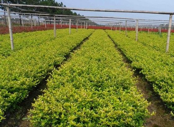 金华市重点科研项目聚焦雾霾治理和苗木产业发展